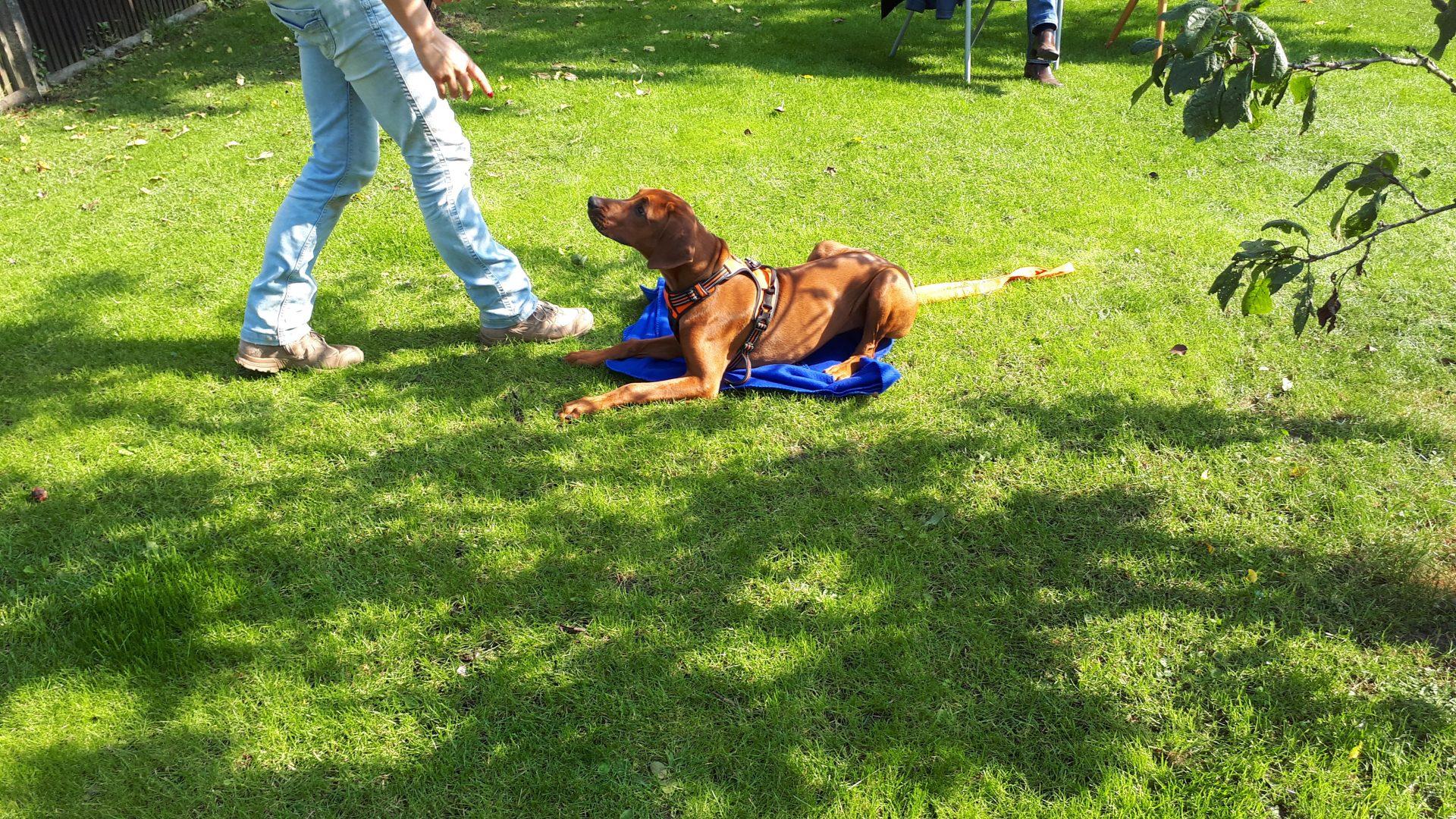 Hundetraining Hundetrainer positive Verstärkung